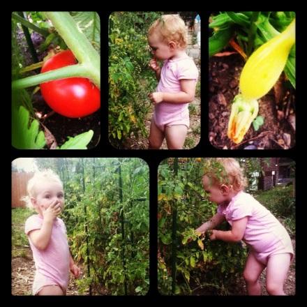 Yoder Harvest